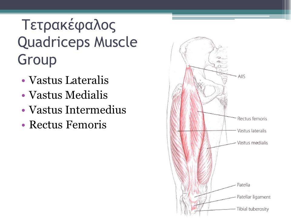 Τετρακέφαλος Quadriceps Muscle Group