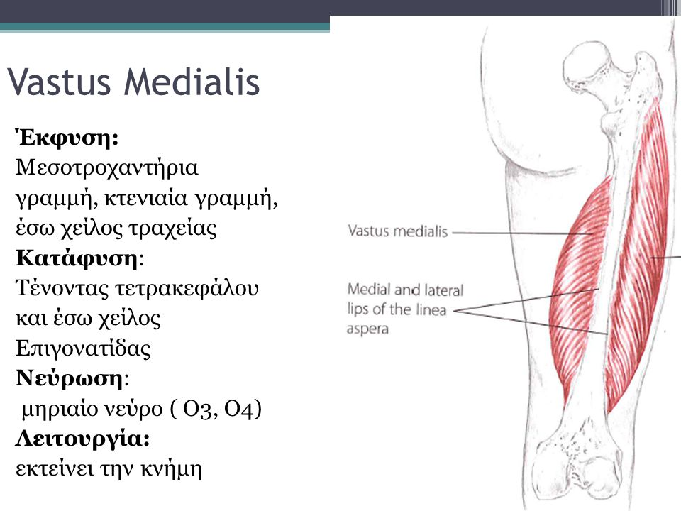 Vastus Medialis