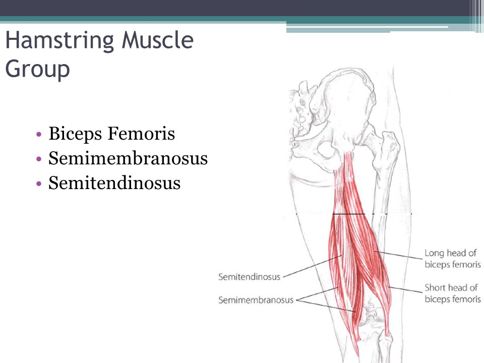 Hamstring Muscle Group