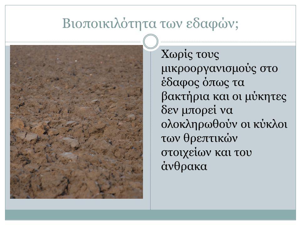 Βιοποικιλότητα των εδαφών;