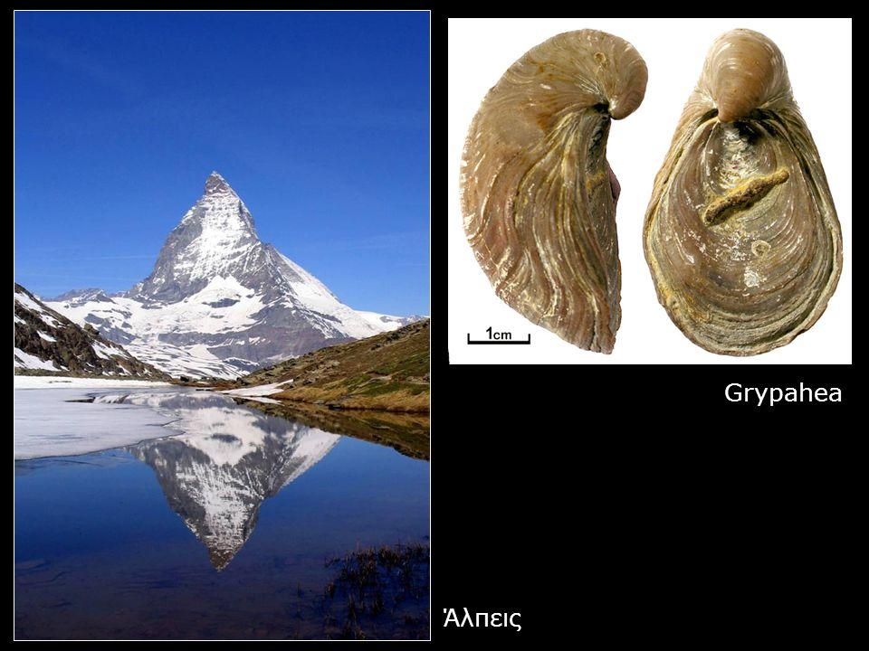 Grypahea Άλπεις