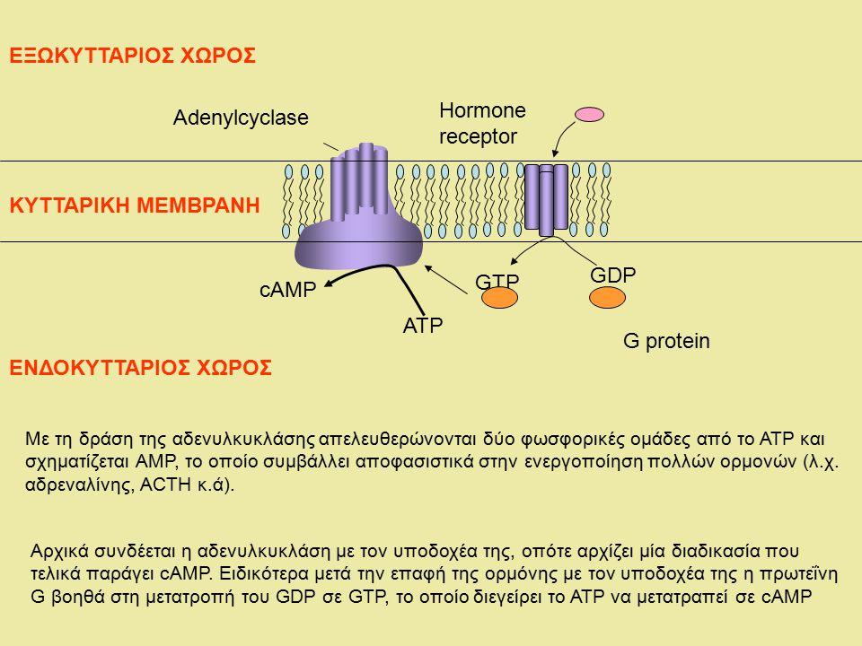 ΕΞΩΚΥΤΤΑΡΙΟΣ ΧΩΡΟΣ Hormone Adenylcyclase receptor ΚΥΤΤΑΡΙΚΗ ΜΕΜΒΡΑΝΗ