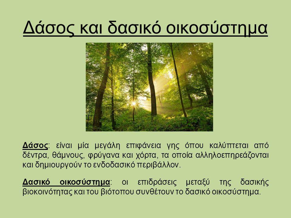 Δάσος και δασικό οικοσύστημα