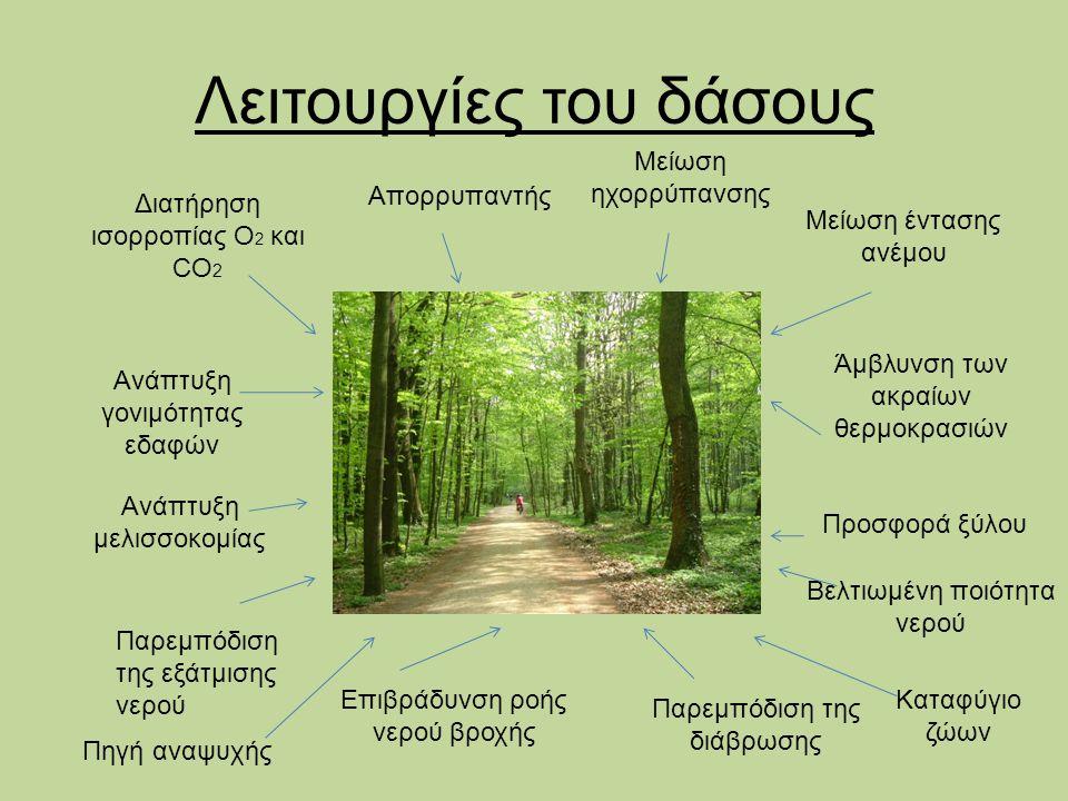 Λειτουργίες του δάσους