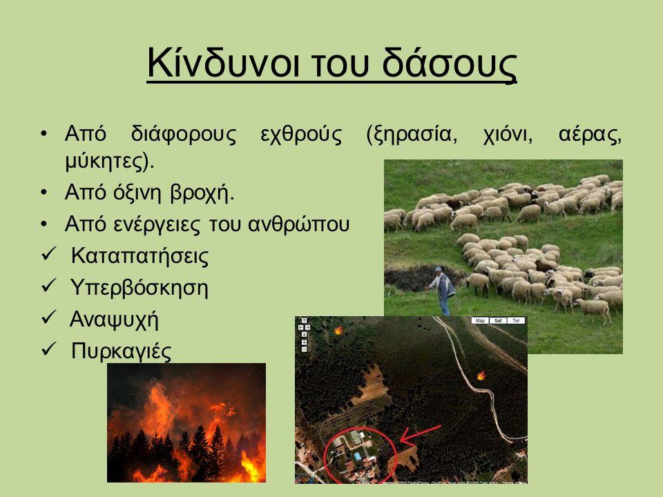 Κίνδυνοι του δάσους Από διάφορους εχθρούς (ξηρασία, χιόνι, αέρας, μύκητες). Από όξινη βροχή. Από ενέργειες του ανθρώπου.