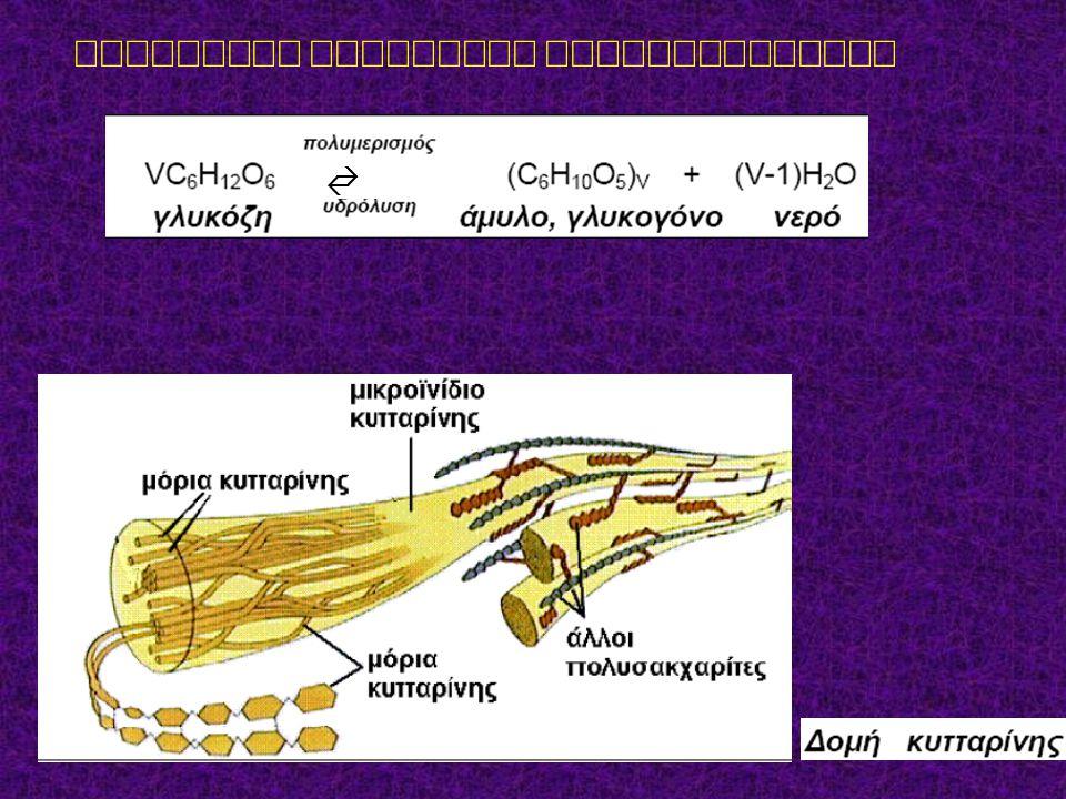Αντίδραση παραγωγής πολυσακχαριτών