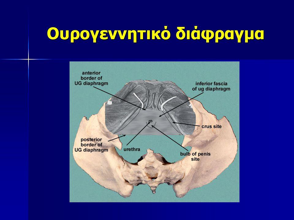 Ουρογεννητικό διάφραγμα