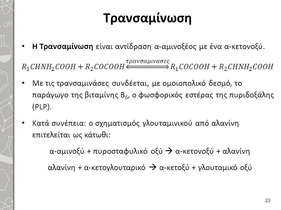 Απαμίνωση 1/2 Η πιο σημαντική είναι εκείνη του γλουταμικού οξέος, σύμφωνα με το σχήμα: (επιτυγχάνεται η απαλλαγή του α- αζώτου).