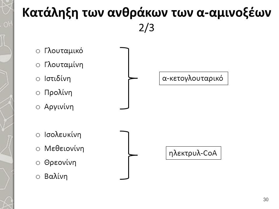 Κατάληξη των ανθράκων των α-αμινοξέων 3/3