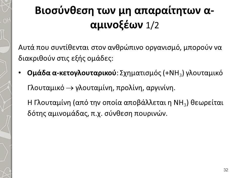 Βιοσύνθεση των μη απαραίτητων α-αμινοξέων 2/2