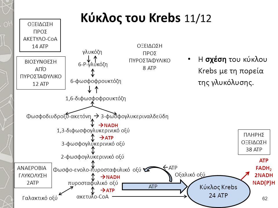 Κύκλος του Krebs 12/12