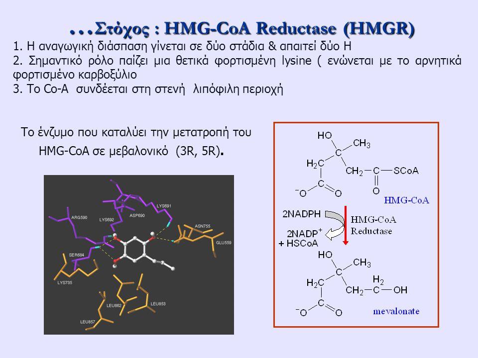 …Στόχος : HMG-CoA Reductase (HMGR)
