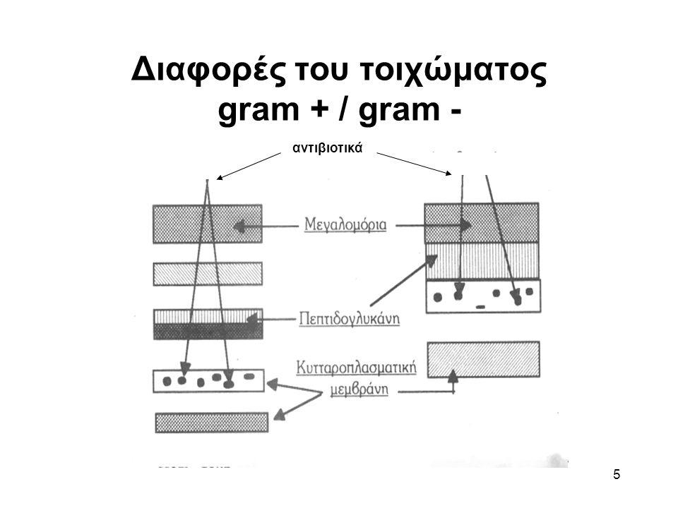 Διαφορές του τοιχώματος gram + / gram -