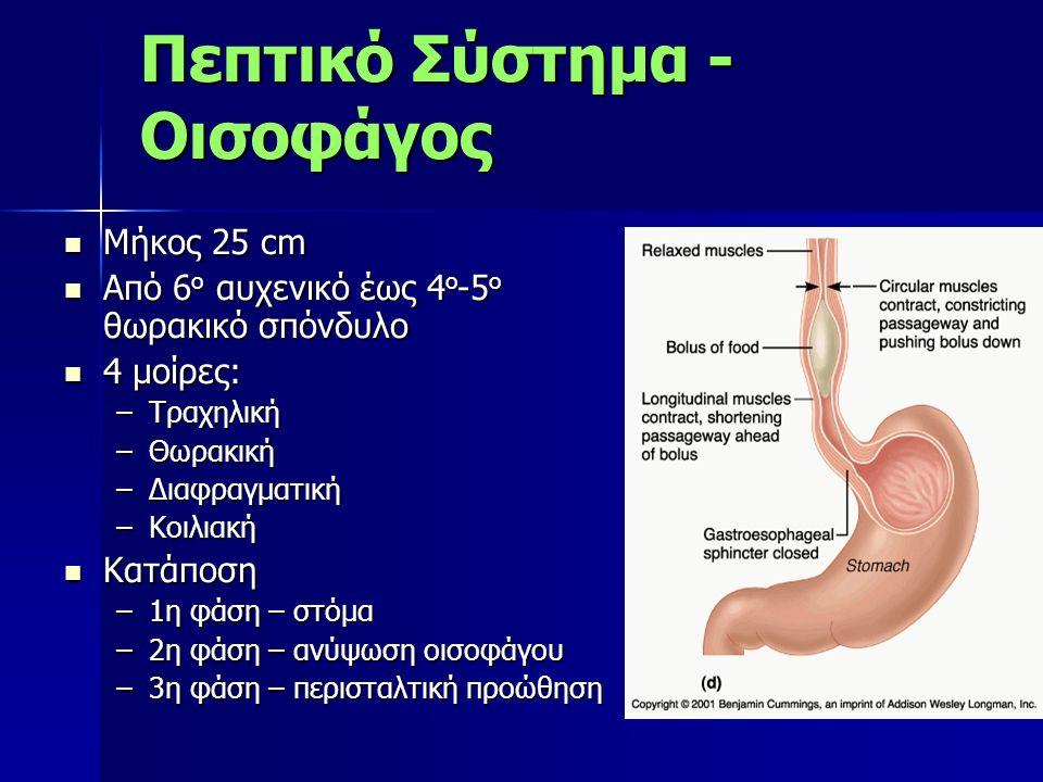 Πεπτικό Σύστημα - Οισοφάγος