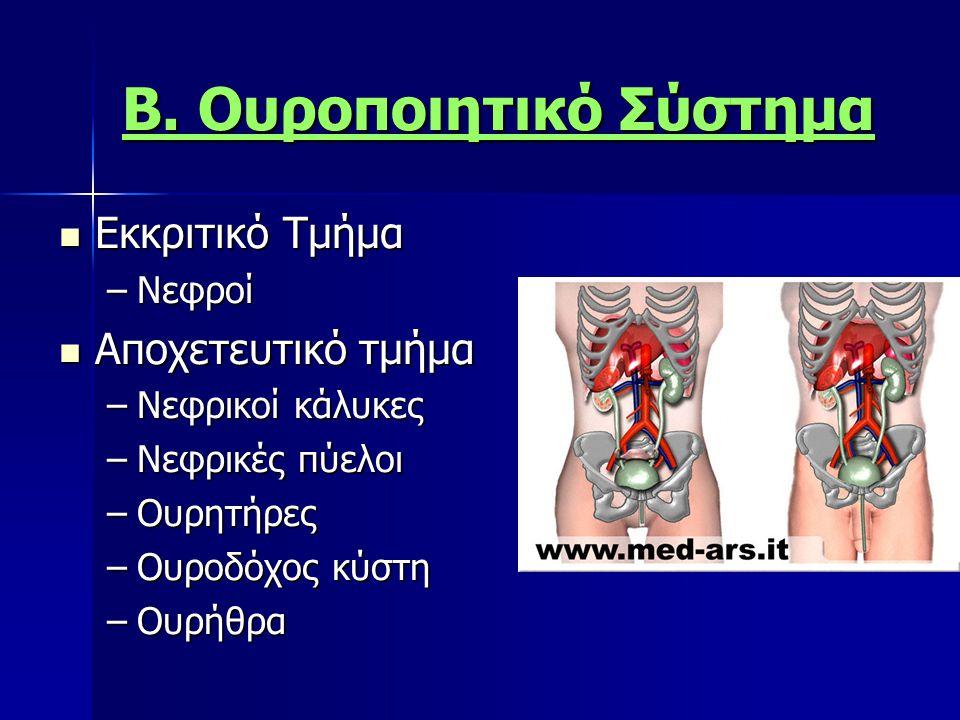 Β. Ουροποιητικό Σύστημα