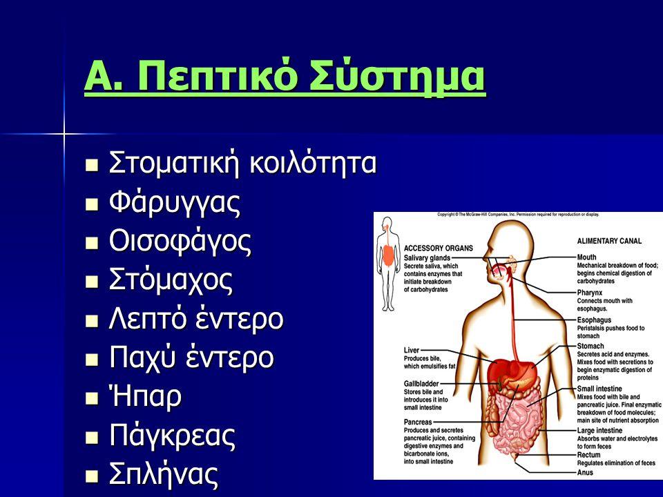 Α. Πεπτικό Σύστημα Στοματική κοιλότητα Φάρυγγας Οισοφάγος Στόμαχος