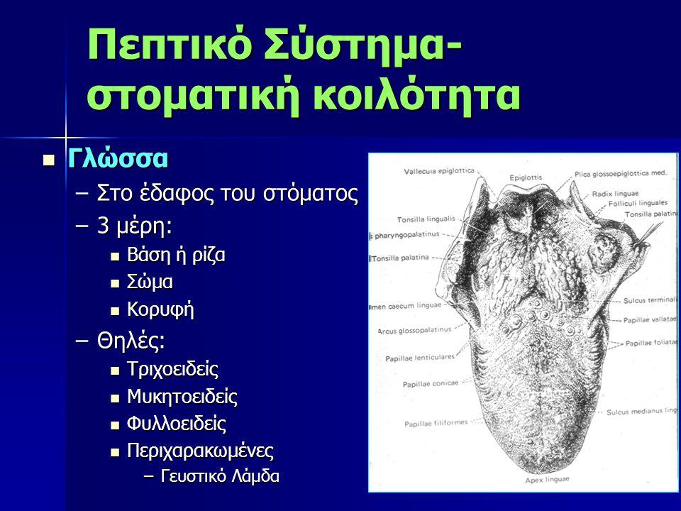 Πεπτικό Σύστημα-στοματική κοιλότητα