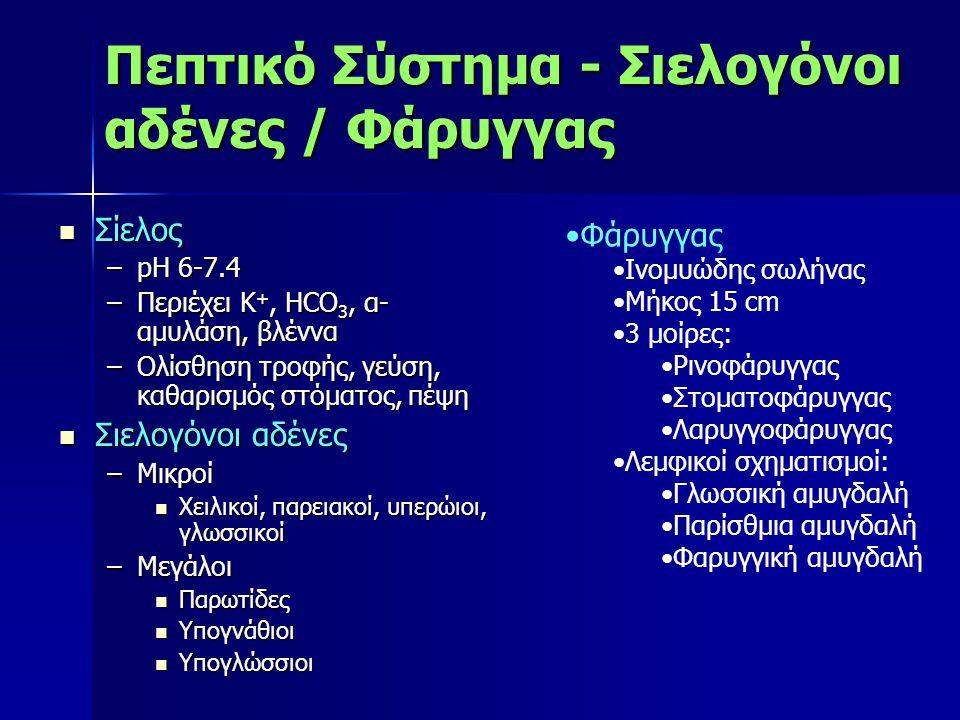 Πεπτικό Σύστημα - Σιελογόνοι αδένες / Φάρυγγας