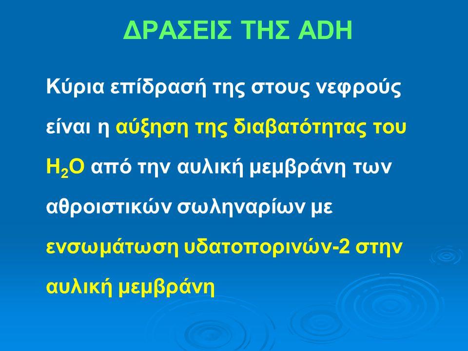 ΔΡΑΣΕΙΣ ΤΗΣ ADH