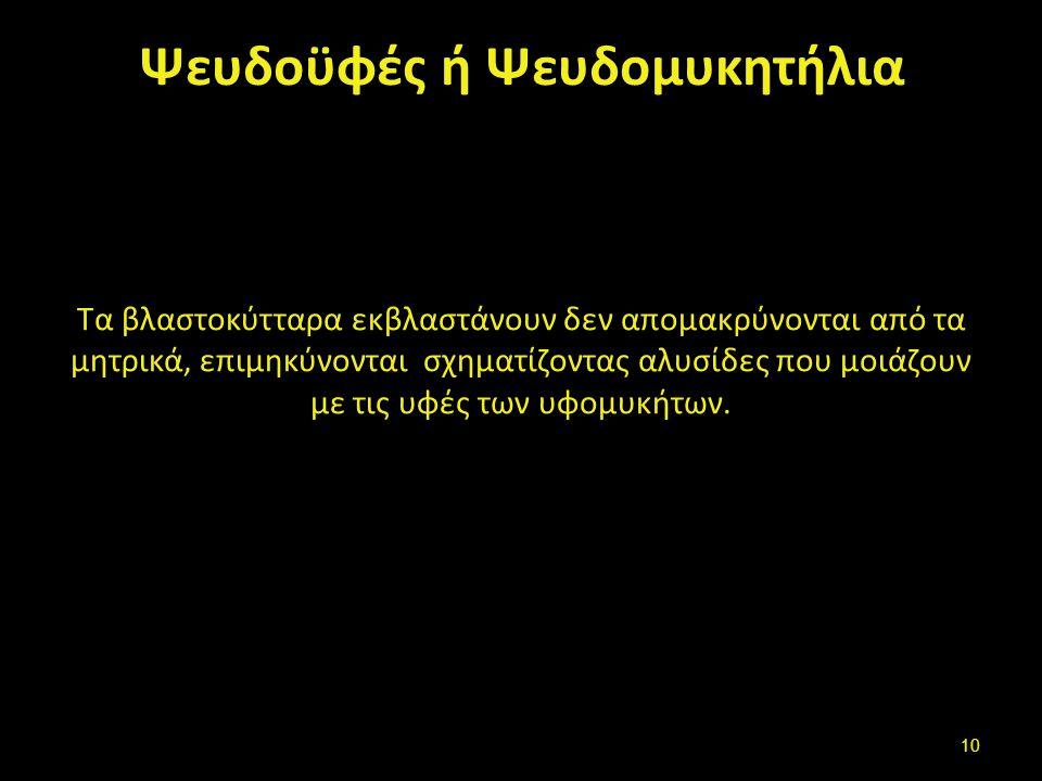 Βλαστοσπόρια - εκβλαστώματα -ψευδοϋφές