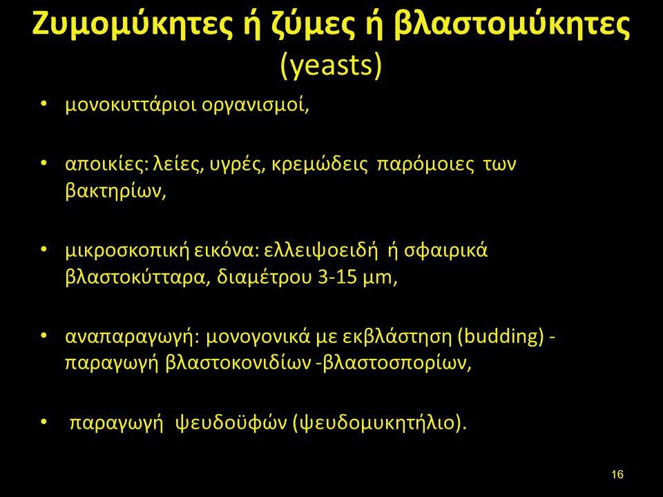 Βλαστοσπόρια- εκβλαστώματα