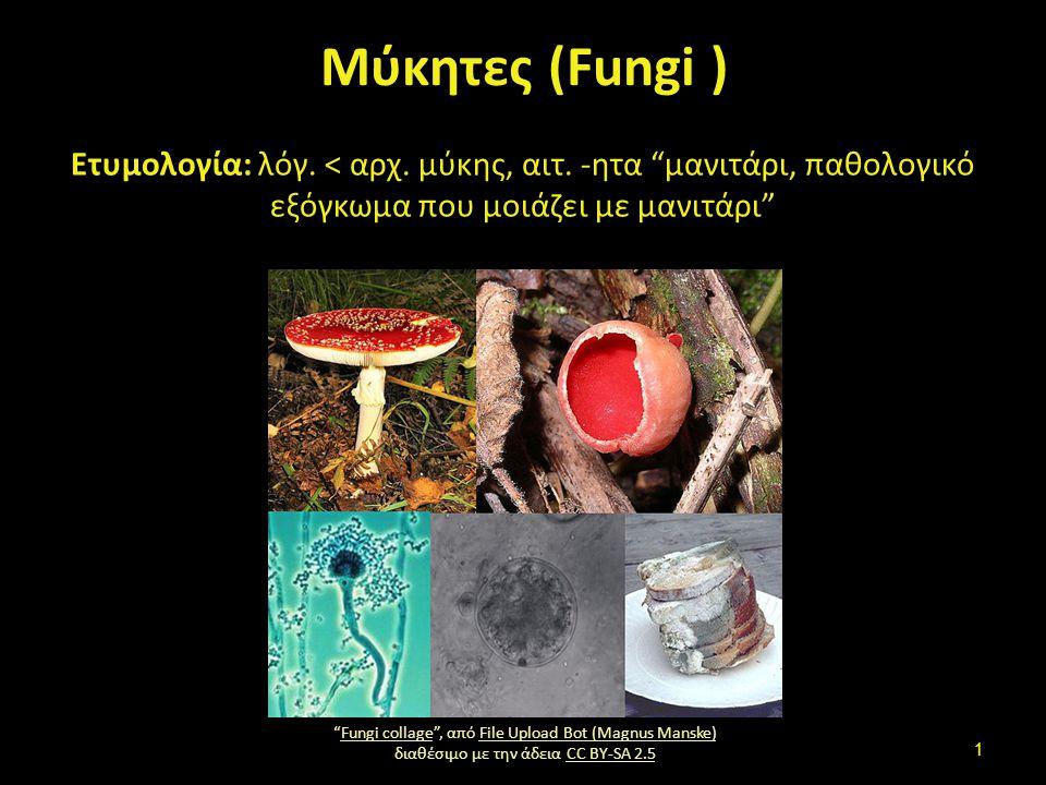 Διαίρεση των έμβιων Φυτά, Ζώα, Μύκητες, Πρώτιστα, Μονήρη (Βακτήρια).