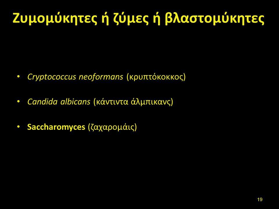 Νηματοειδείς ή υφομύκητες ή μυκηλιακοί (mold-mould)