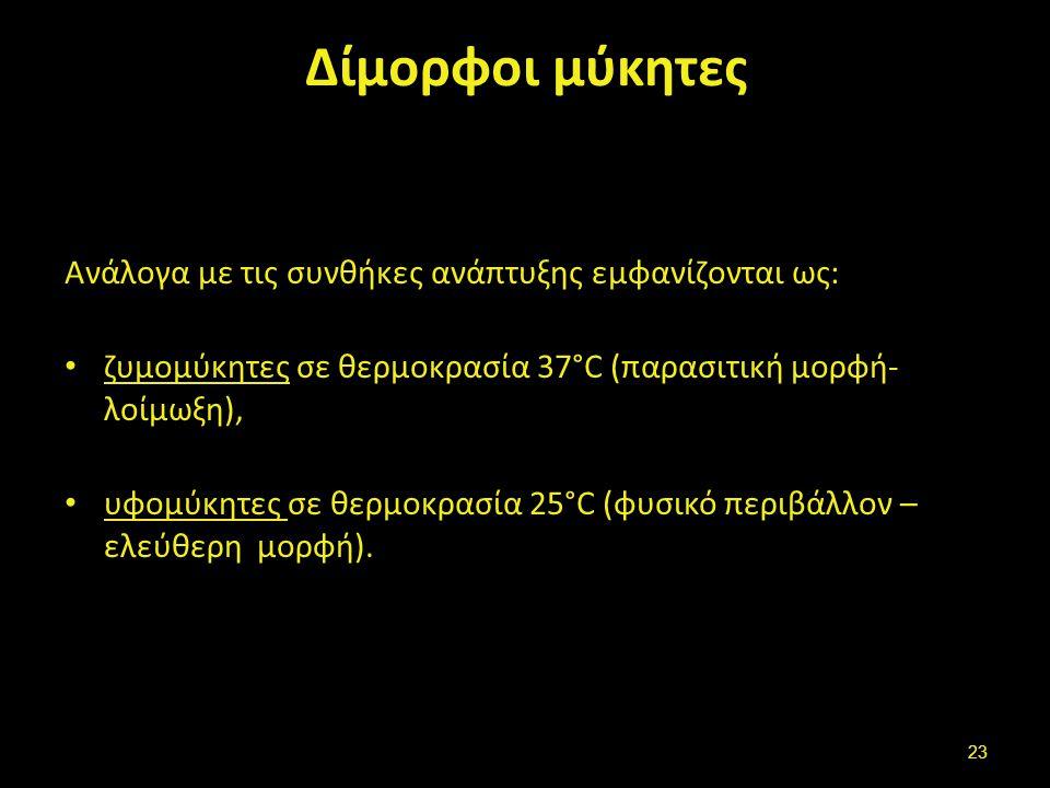 Aspergillus , από Strobilomyces διαθέσιμο ως κοινό κτήμα.