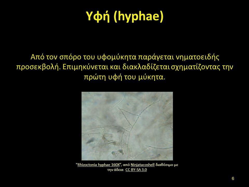 Σπόρος - Υφή – Μυκητύλιο (1 από 2)