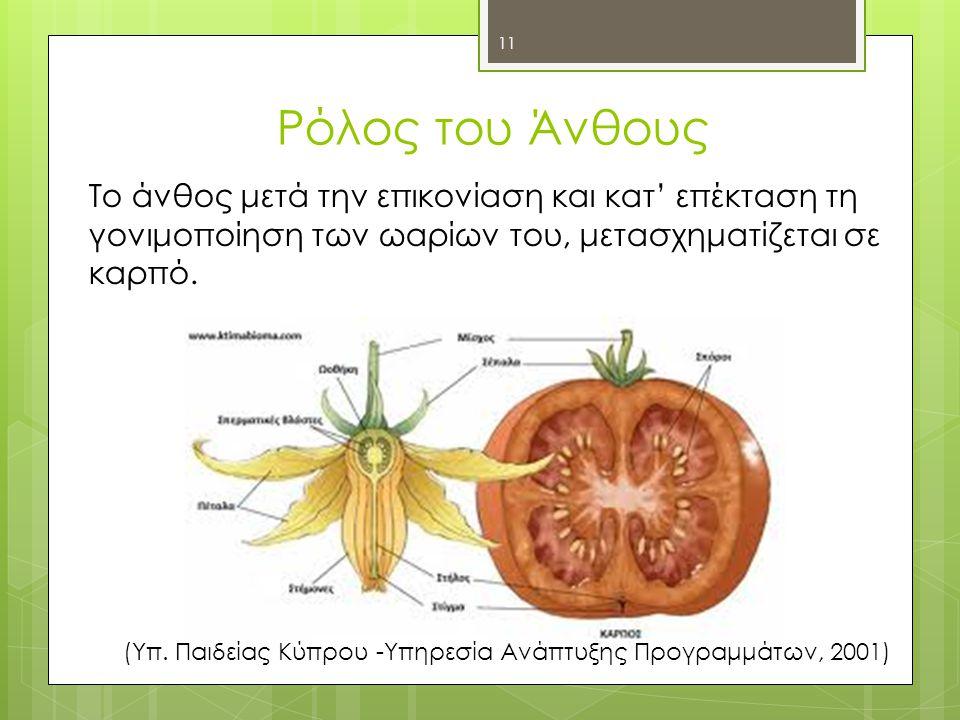 Ρόλος του Άνθους Το άνθος μετά την επικονίαση και κατ' επέκταση τη γονιμοποίηση των ωαρίων του, μετασχηματίζεται σε καρπό.