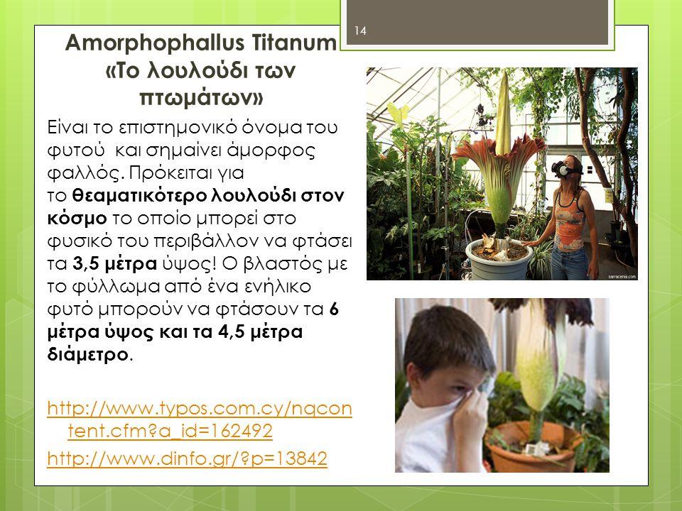 Amorphophallus Titanum «Το λουλούδι των πτωμάτων»