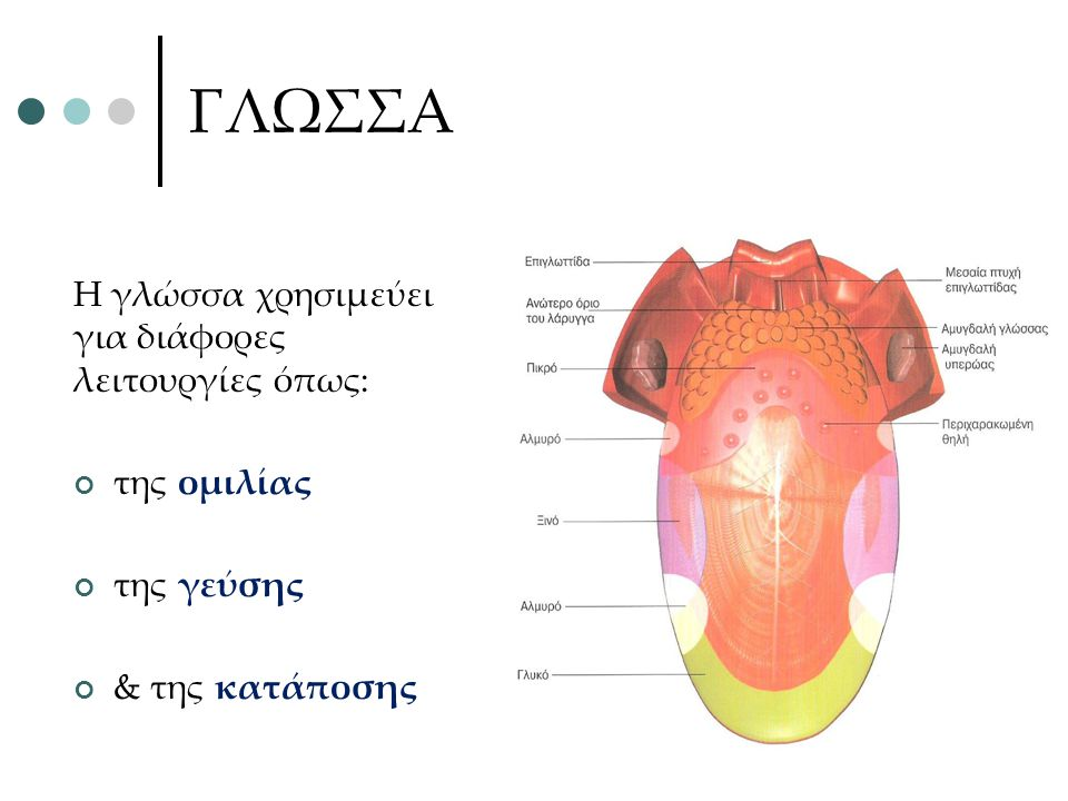 ΓΛΩΣΣΑ Η γλώσσα χρησιμεύει για διάφορες λειτουργίες όπως: της ομιλίας