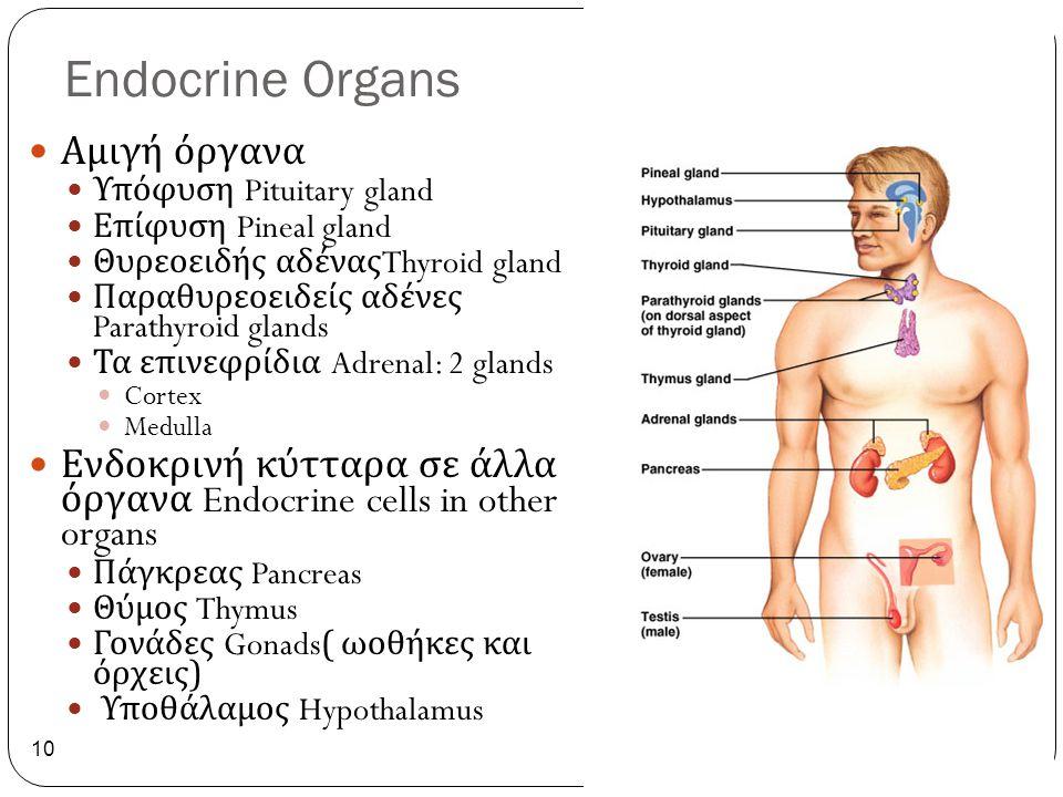 Endocrine Organs Αμιγή όργανα