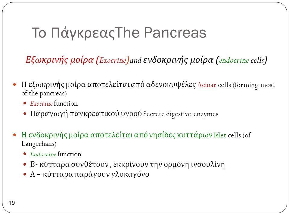 Το ΠάγκρεαςThe Pancreas