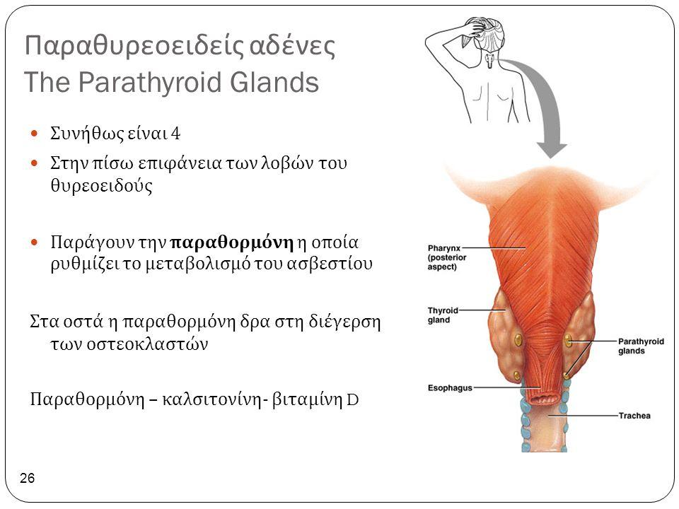 Παραθυρεοειδείς αδένες The Parathyroid Glands