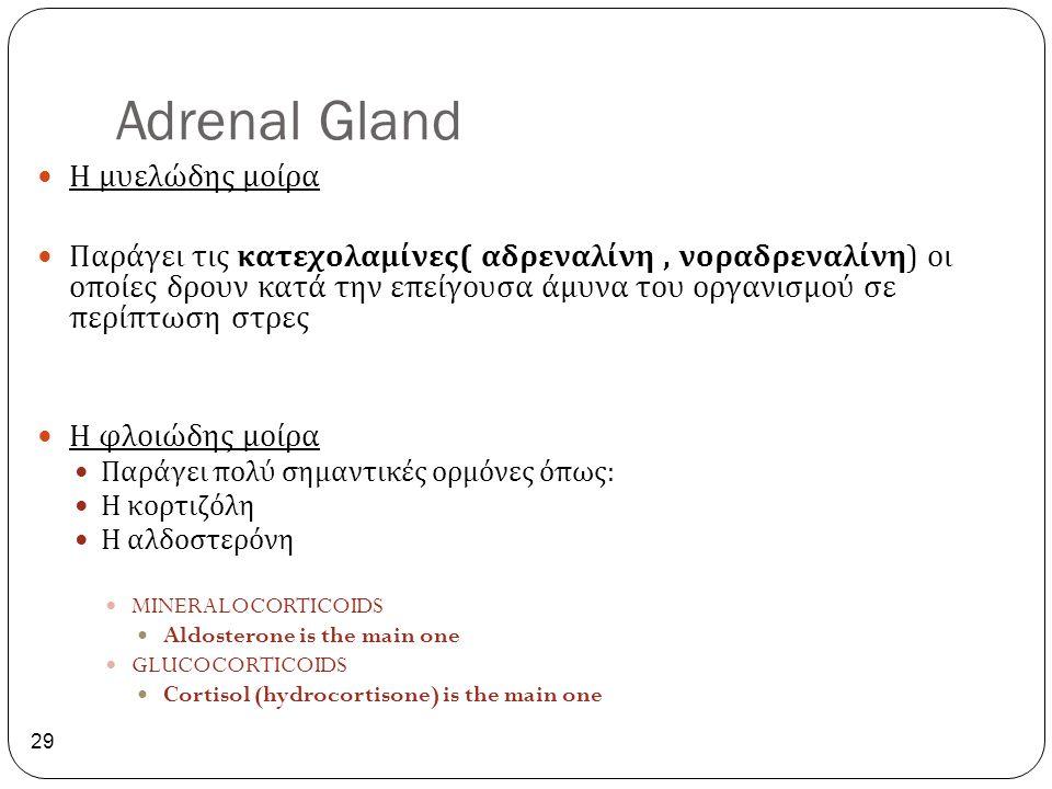 Adrenal Gland Η μυελώδης μοίρα