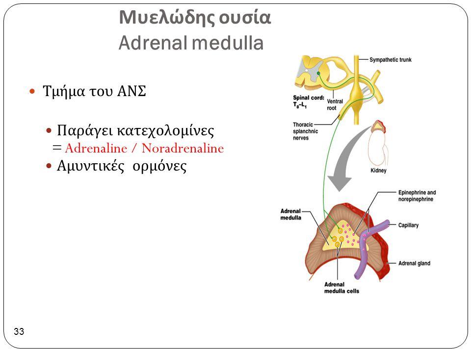Μυελώδης ουσία Adrenal medulla