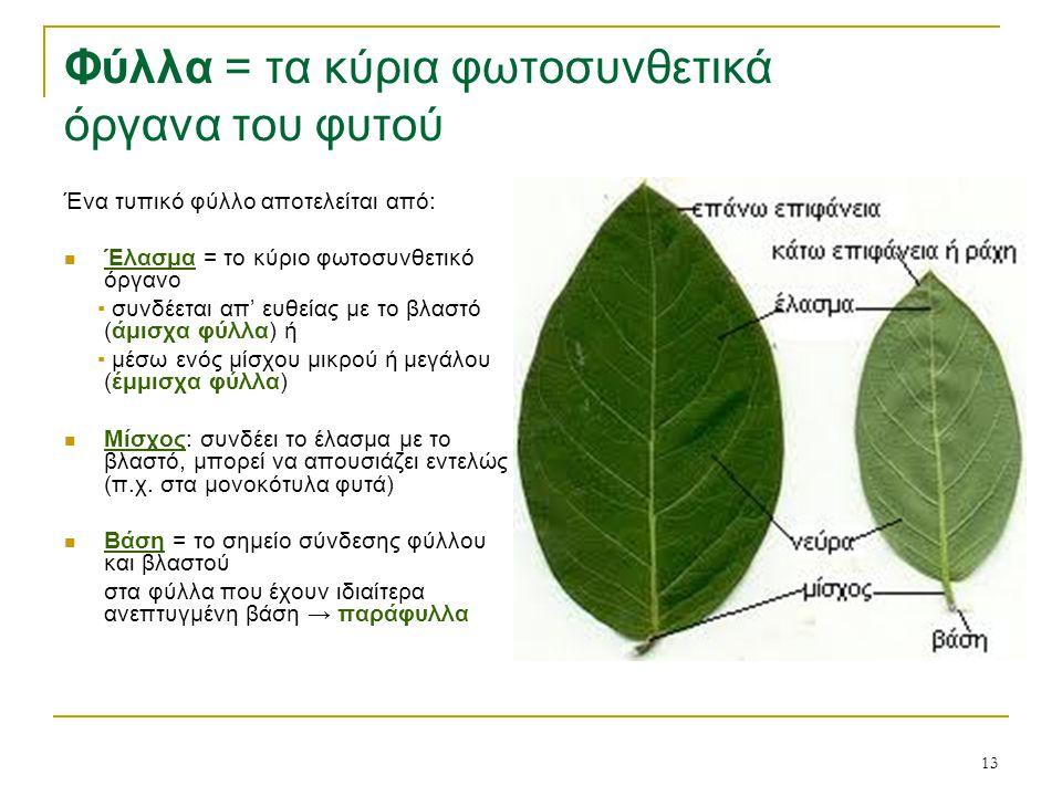 Φύλλα = τα κύρια φωτοσυνθετικά όργανα του φυτού