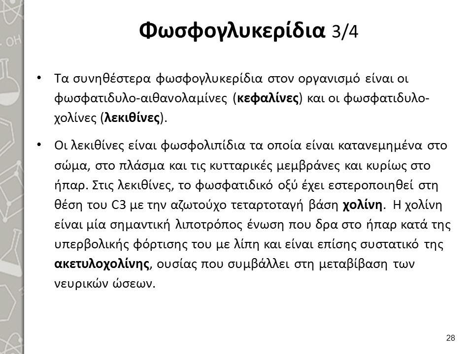 Φωσφογλυκερίδια 4/4