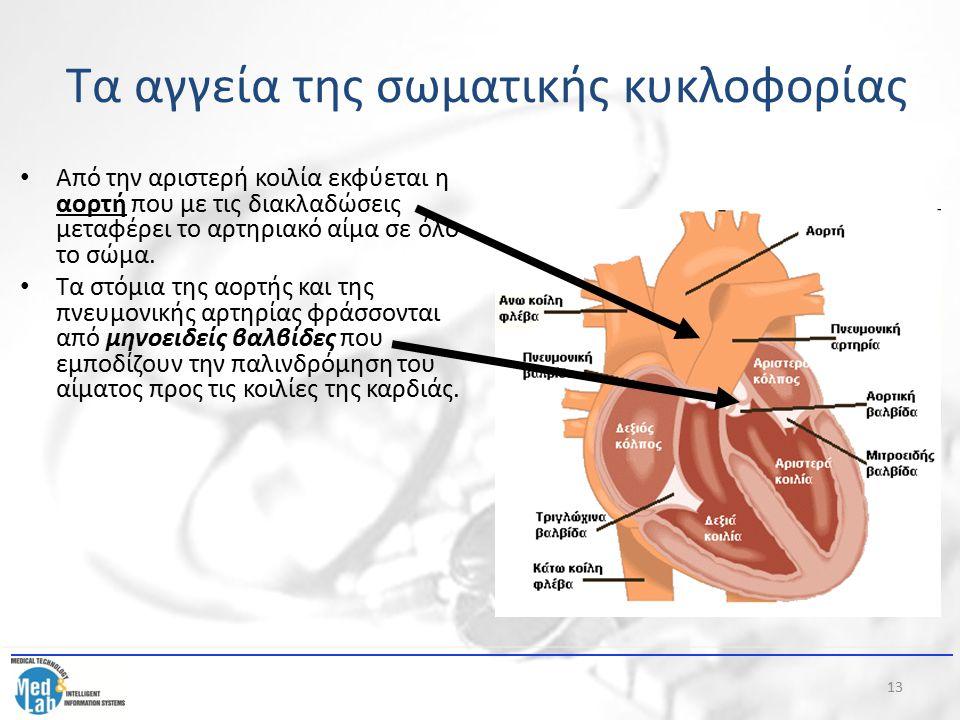 Τα αγγεία της σωματικής κυκλοφορίας