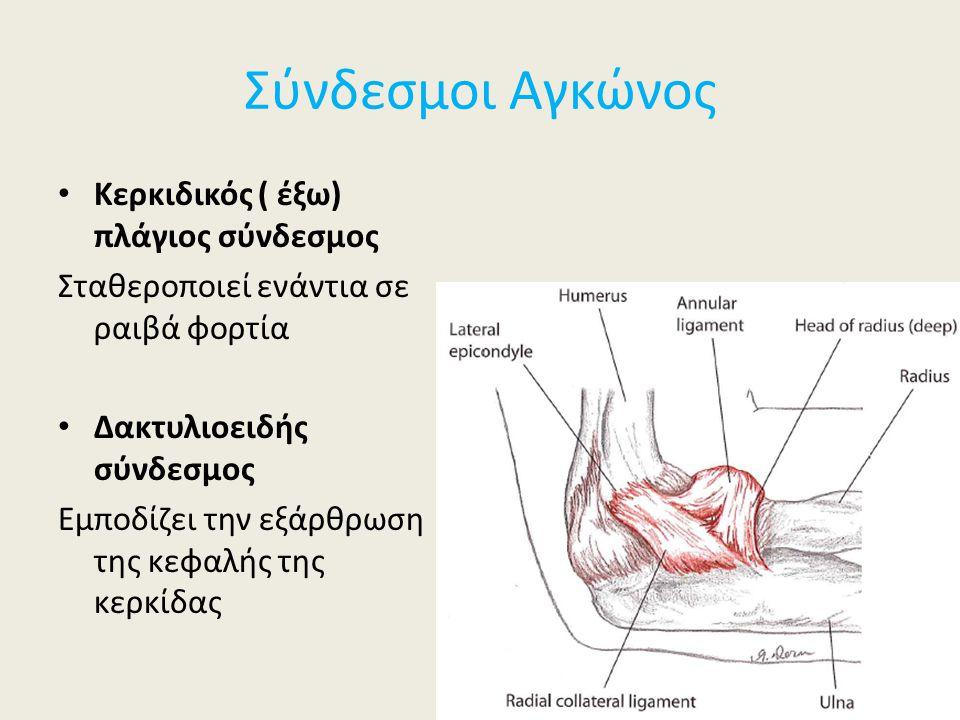 Σύνδεσμοι Αγκώνος Κερκιδικός ( έξω) πλάγιος σύνδεσμος