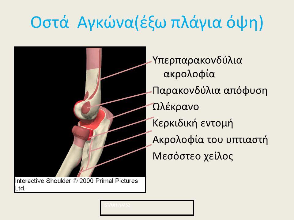 Οστά Αγκώνα(έξω πλάγια όψη)