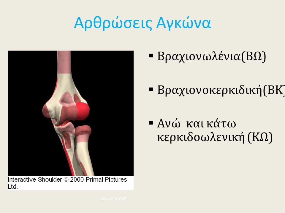 Αρθρώσεις Αγκώνα Βραχιονωλένια(ΒΩ) Βραχιονοκερκιδική(ΒΚ)