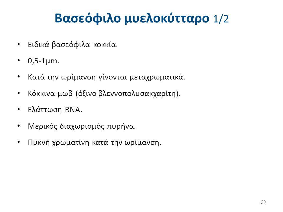 Βασεόφιλο μυελοκύτταρο 2/2