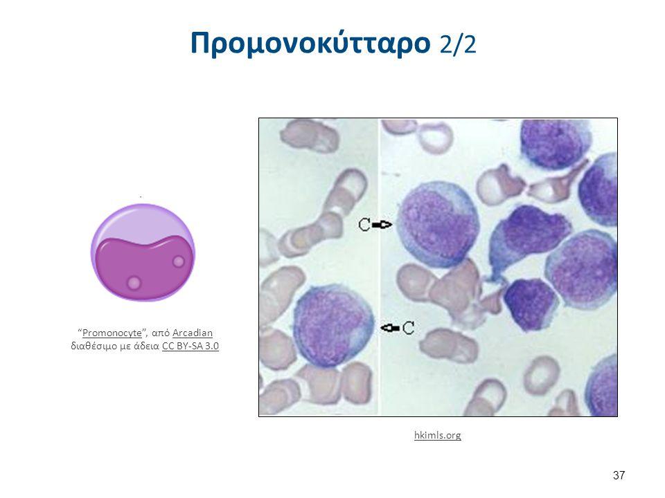 Μονοκύτταρο 1/2 Μυελό 2%. Περιφερικό αίμα 3-11%. 15-20μm.