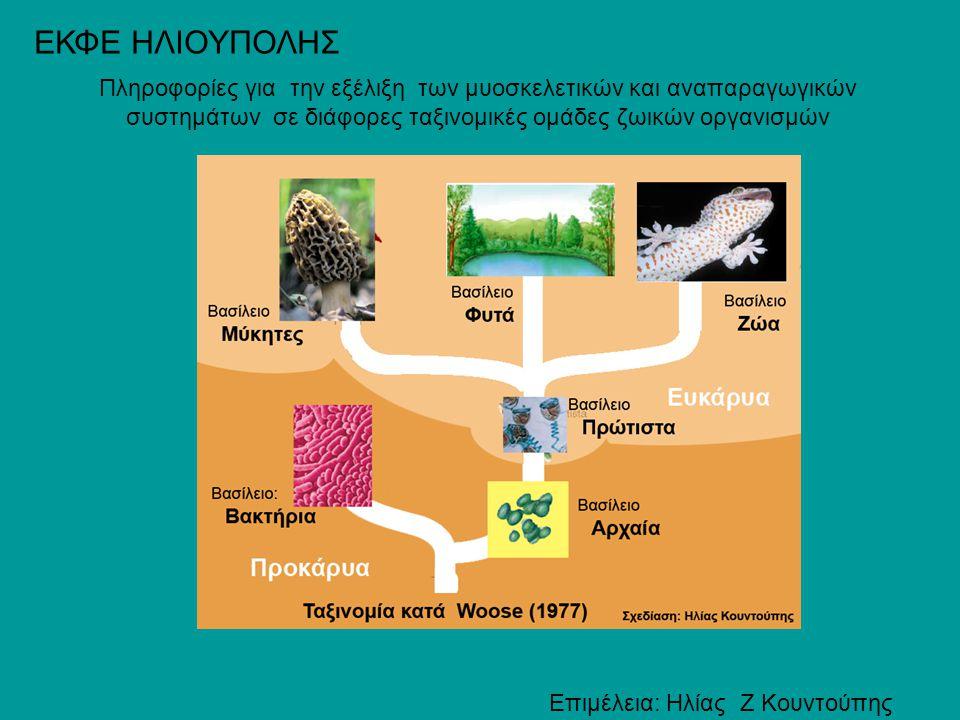 ΕΚΦΕ ΗΛΙΟΥΠΟΛΗΣ Πληροφορίες για την εξέλιξη των μυοσκελετικών και αναπαραγωγικών συστημάτων σε διάφορες ταξινομικές ομάδες ζωικών οργανισμών.