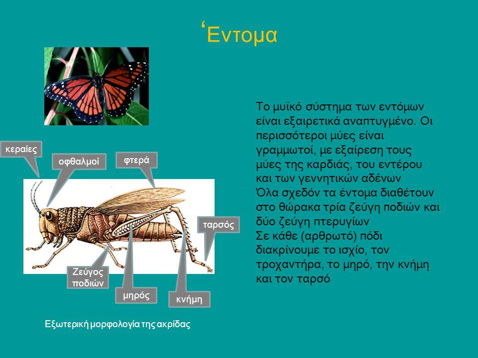 'Εντομα