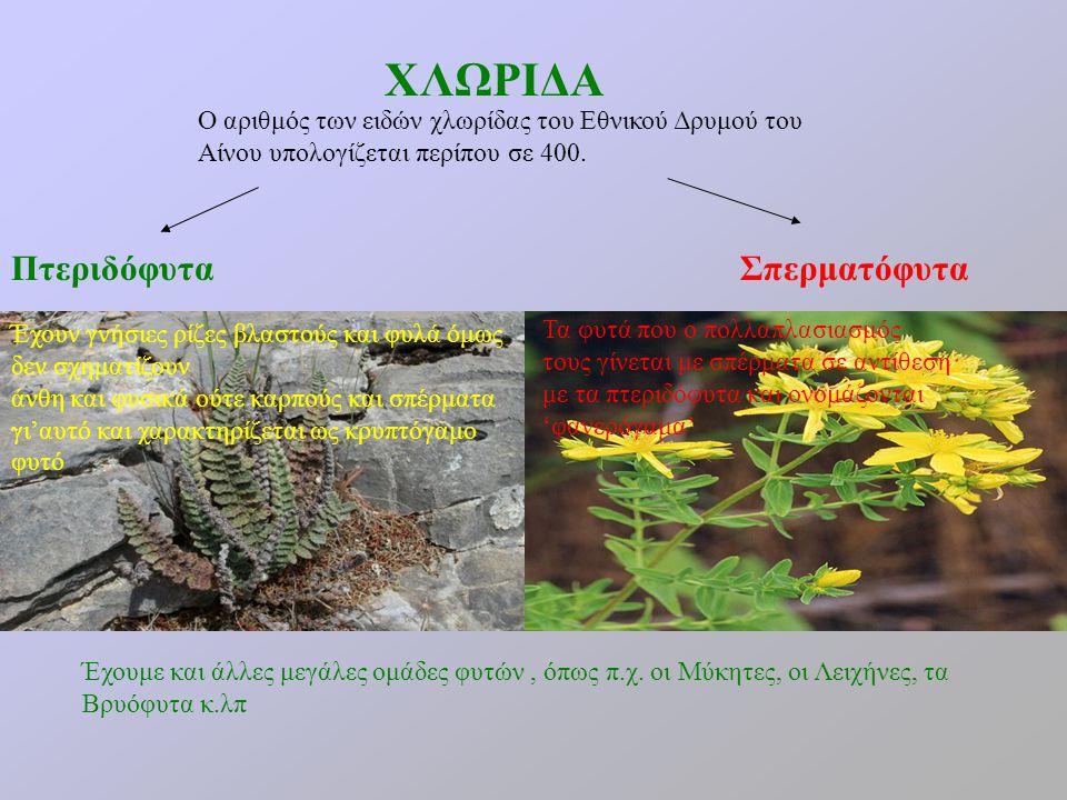 ΧΛΩΡΙΔΑ Πτεριδόφυτα Σπερματόφυτα
