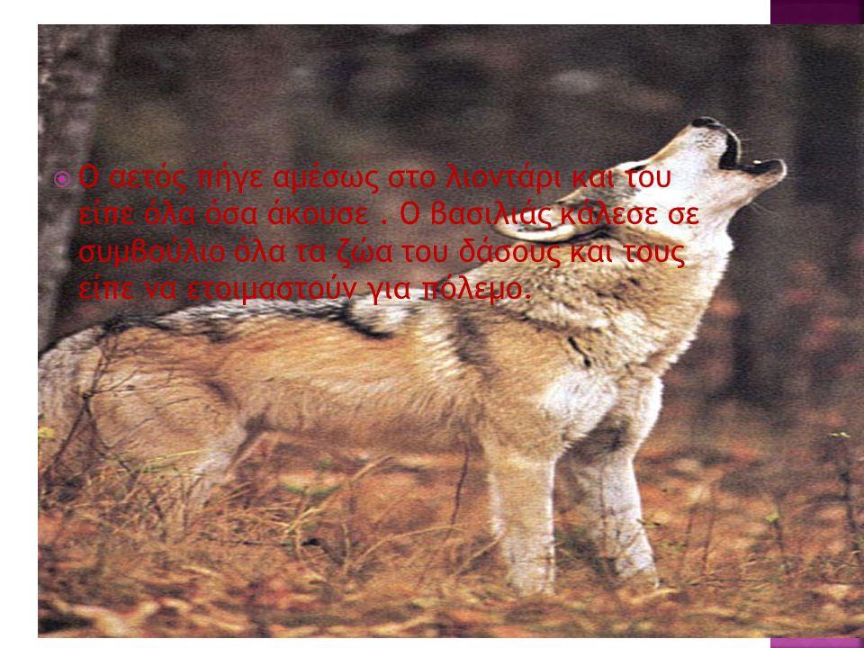 Ο αετός πήγε αμέσως στο λιοντάρι και του είπε όλα όσα άκουσε