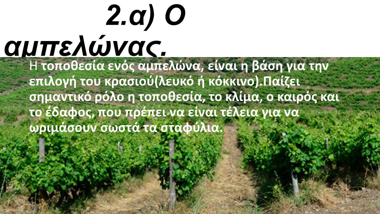 2.α) Ο αμπελώνας.
